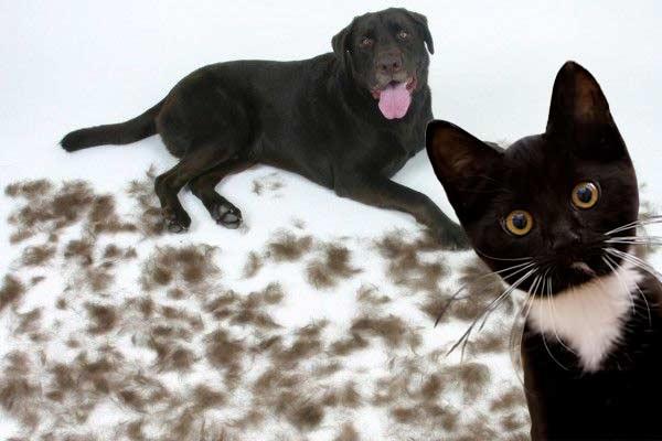 hondenharen-kattenharen