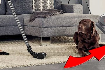 stofzuiger-hondenharen-kattenharen-header